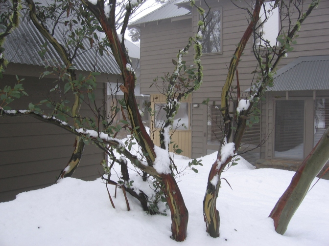 3 golden rules for predicting Aussie snowfall events