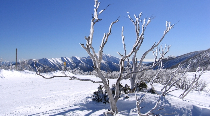 5 reasons you should visit the Aussie snow fields this year