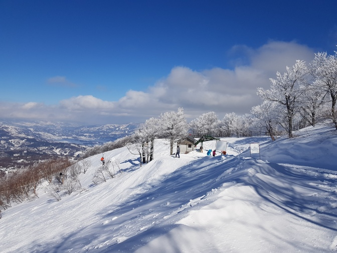 Madarao: An untapped Tree-Skiing Powder Paradise