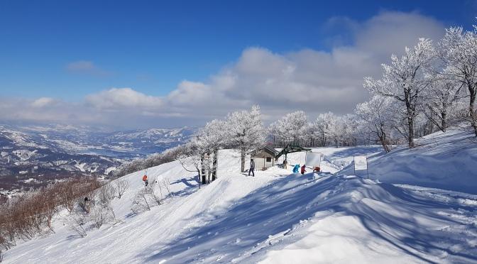 Madarao: An untapped Tree-Skiing Powder Paradise