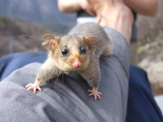 Celebrating National Threatened Species Day at Falls Creek